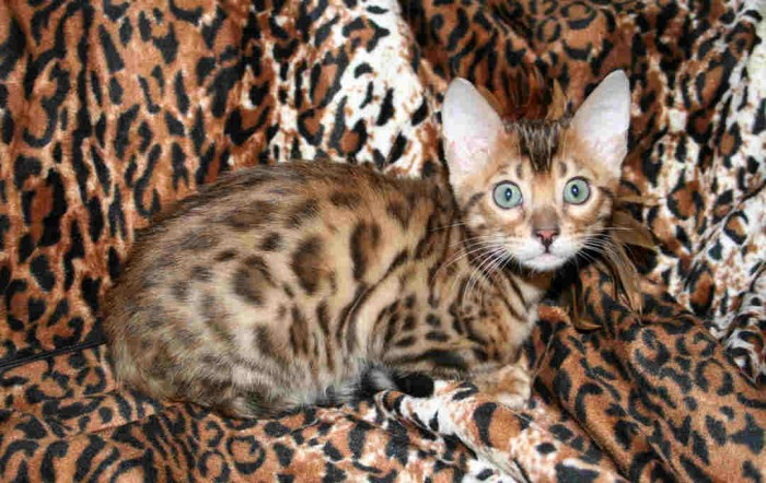 Photo of Top 10 Strangest Crossbred Animals in The World