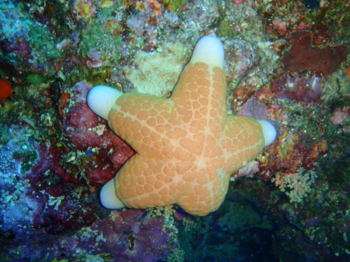 4IMG Apo Reef 2012