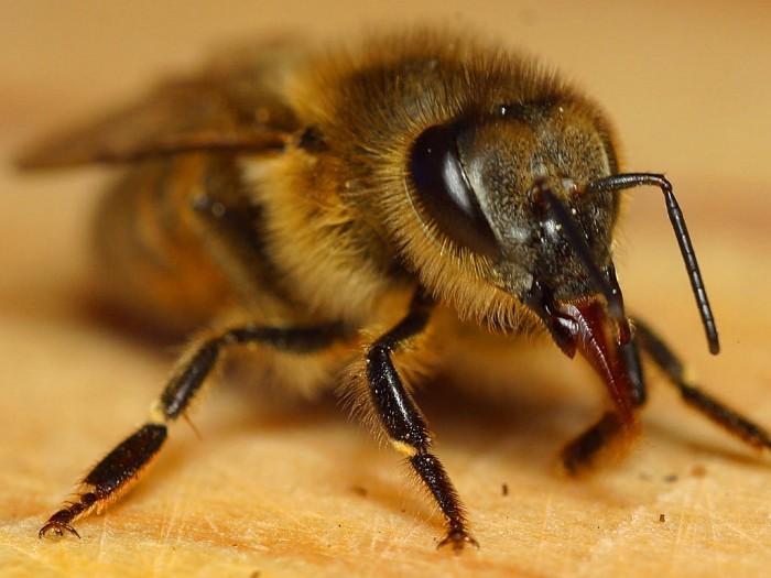 Bee1web