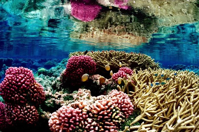 Great-Barrier-Reef-Beautiful-Coral-Australia