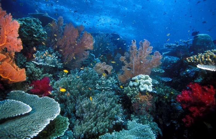 - Raja Ampat Reef
