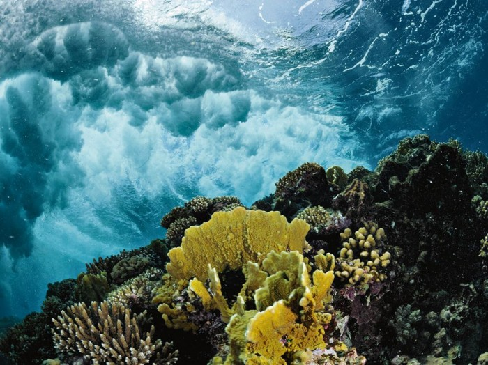 - Red Sea Coral Reef