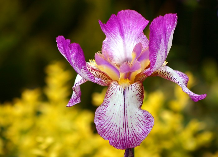 The Iris1