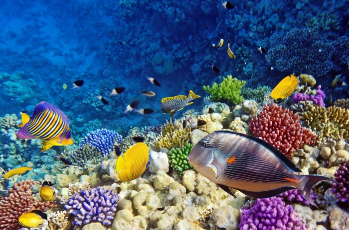 amazing-coral-reefs-13