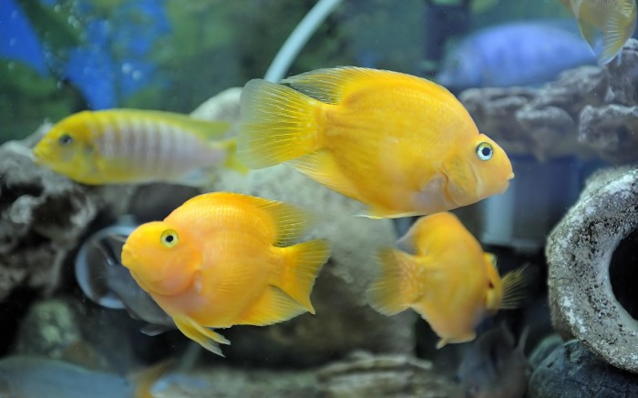 Top 10 strangest crossbred animals in the world topteny 2015 for Pictures of parrot fish