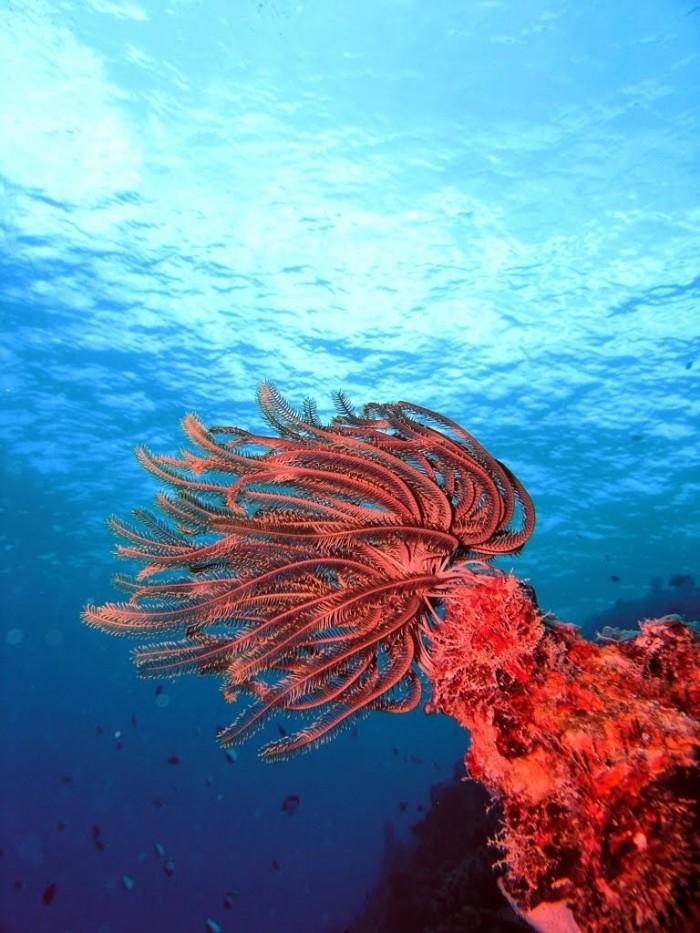 apo reef 3