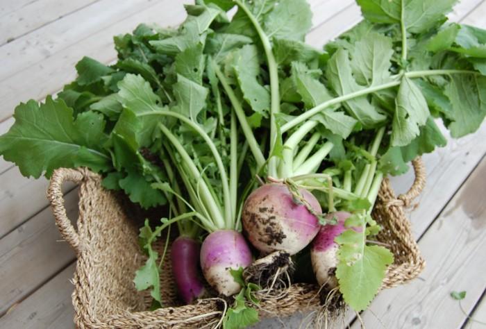 basket-of-turnips