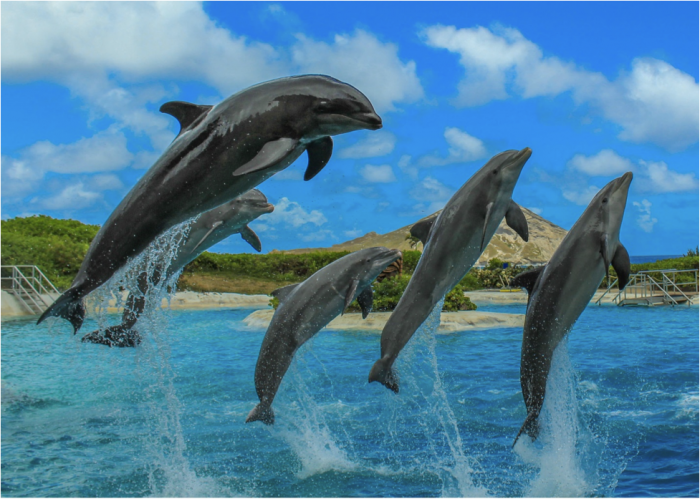 dolphin-and-wholphin-jumping-together