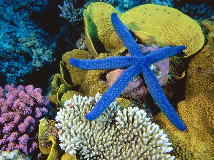 great_barrier_reef3