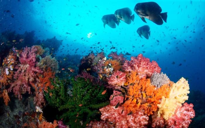 raja-ampat-reefs1
