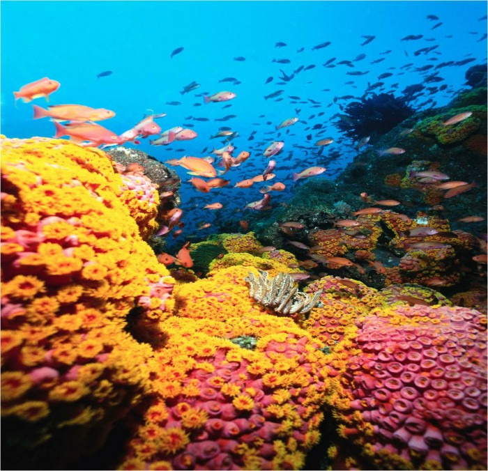 tumblr_static_healthy.coral.reef.no.title