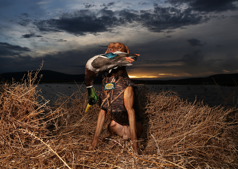 Photo of Top 10 Best Hunting Dogs