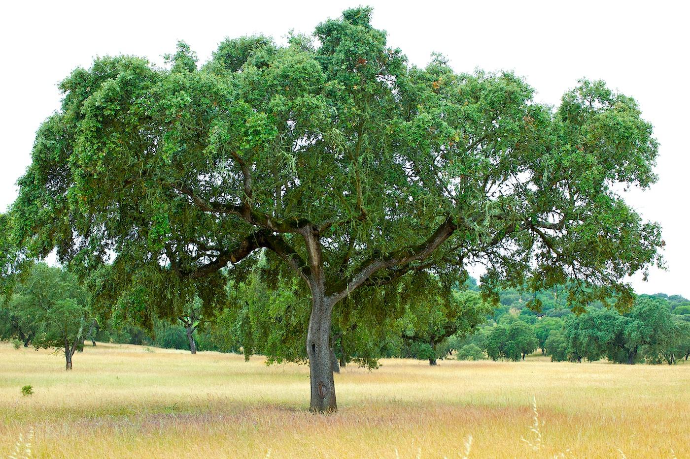 Portugal2010IMG_1554