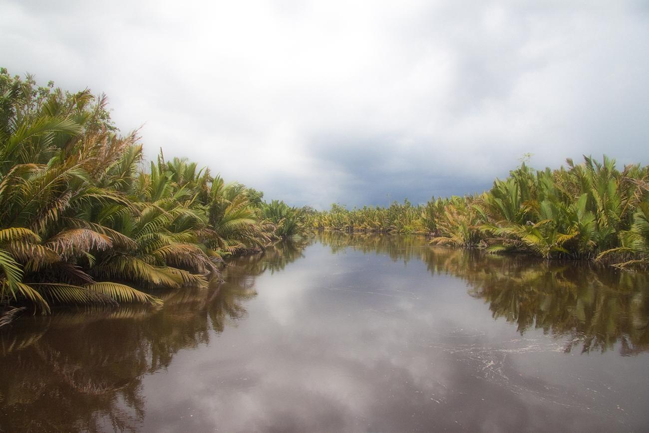 Tanjung_Puting_National_Park_wetland