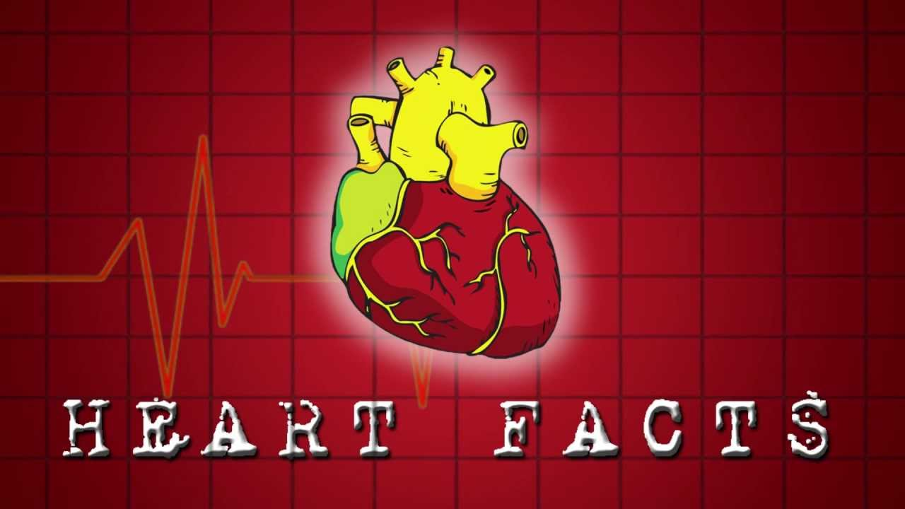 Photo of Top 10 Most Interesting Facts About Human Heart