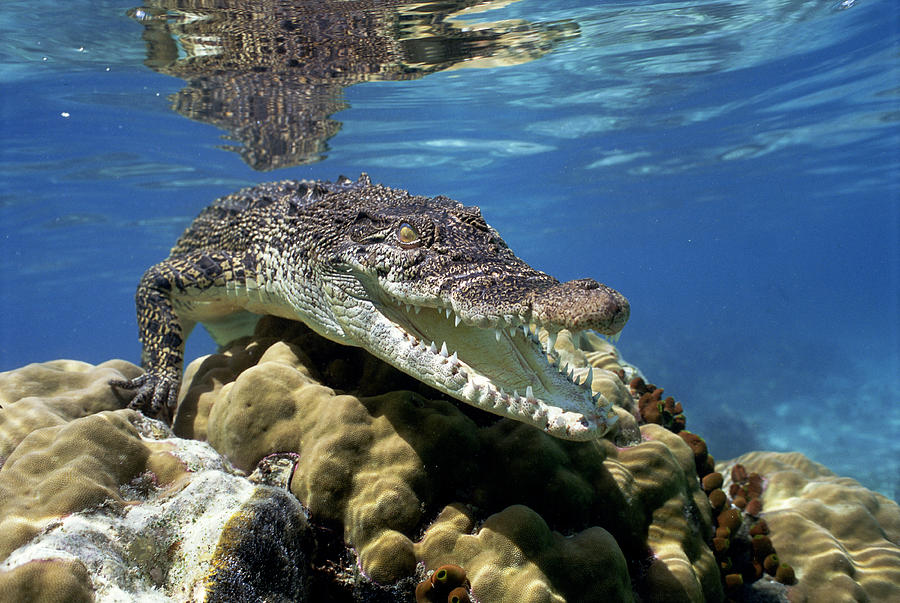 Photo of Top 10 Deadliest Animals On Earth