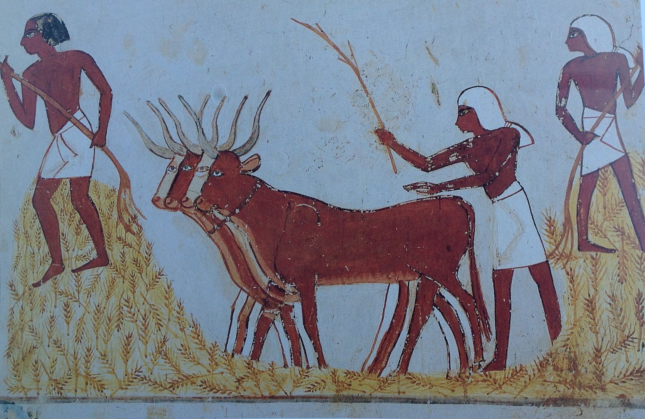 egypt-cattle-1