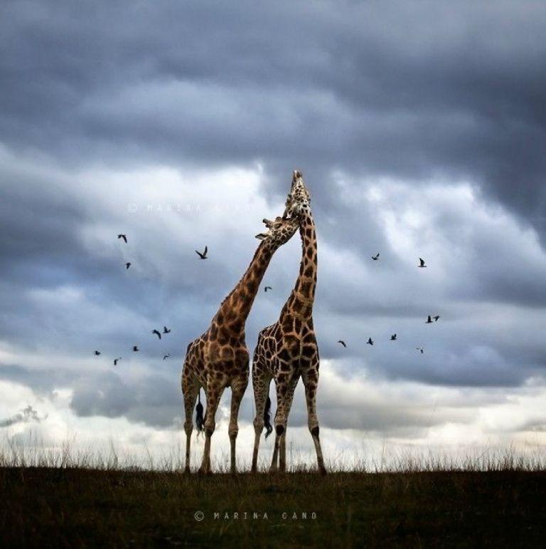 True Love by Marina Cano