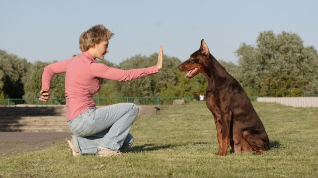Photo of Top 10 Best Dog Trainers in the United States