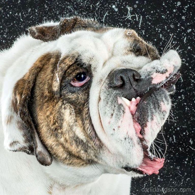 Carli Davidson Pet Photography (1)