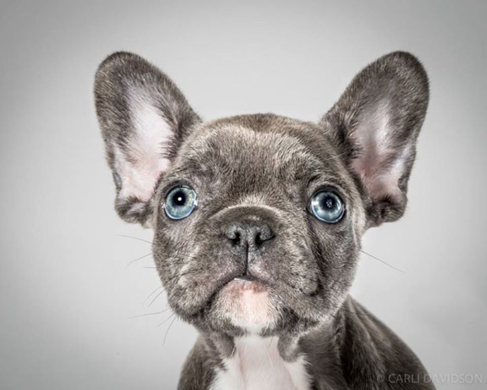 Carli Davidson Pet Photography (2)
