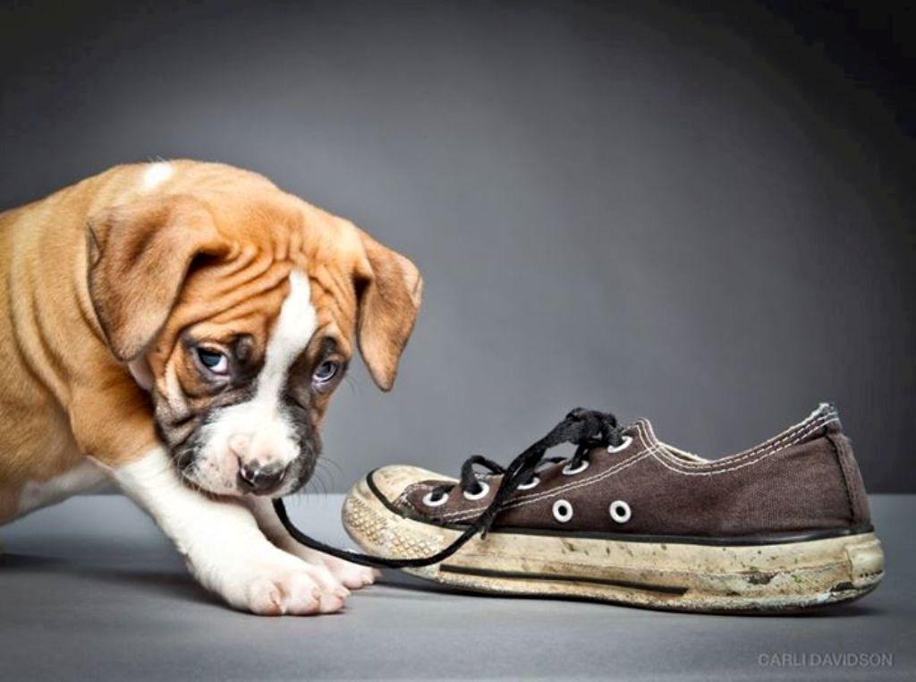 Carli Davidson Pet Photography (3)