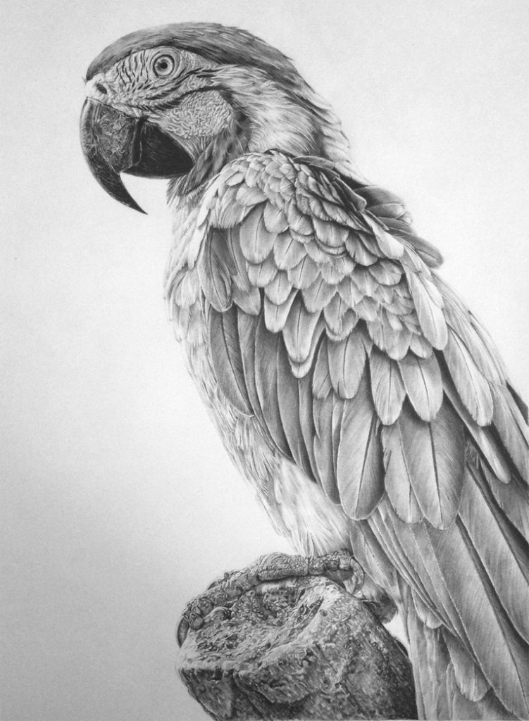 Monica lee is a malaysian pencil artist who is passionate about creating photo realistic drawings using her graphite pencils learn to draw easily here