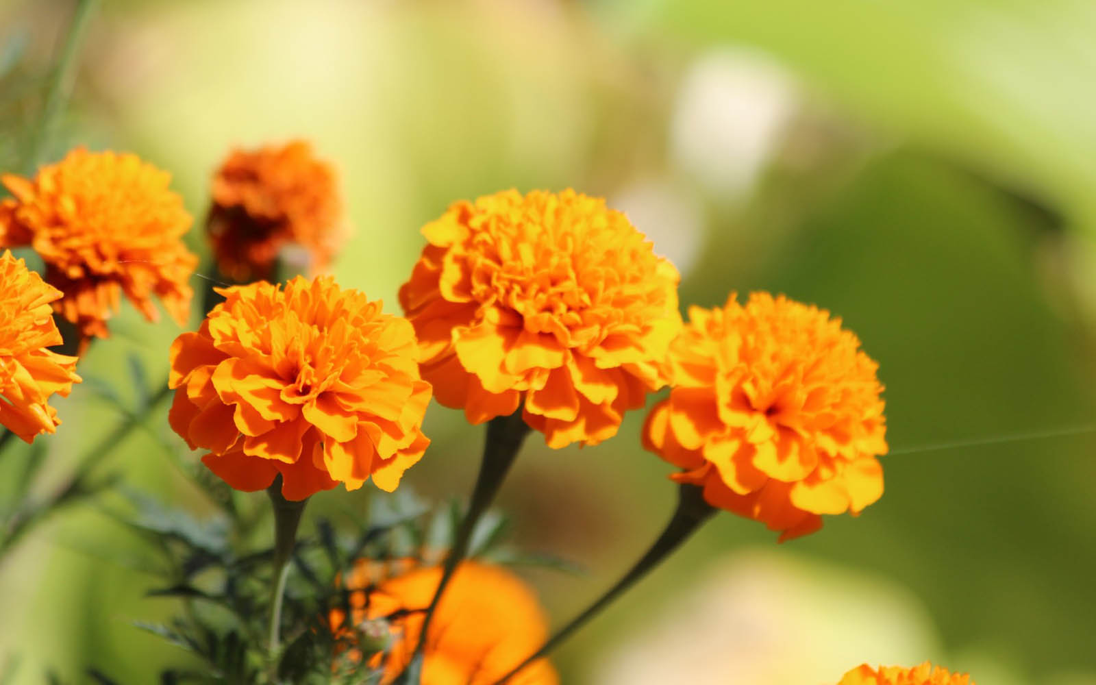 Top 10 Most Popular Flowers to Plant in Your Garden