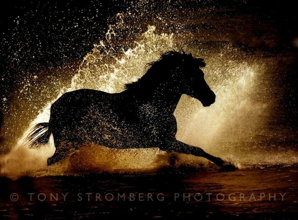 Tony Stromberg (12)