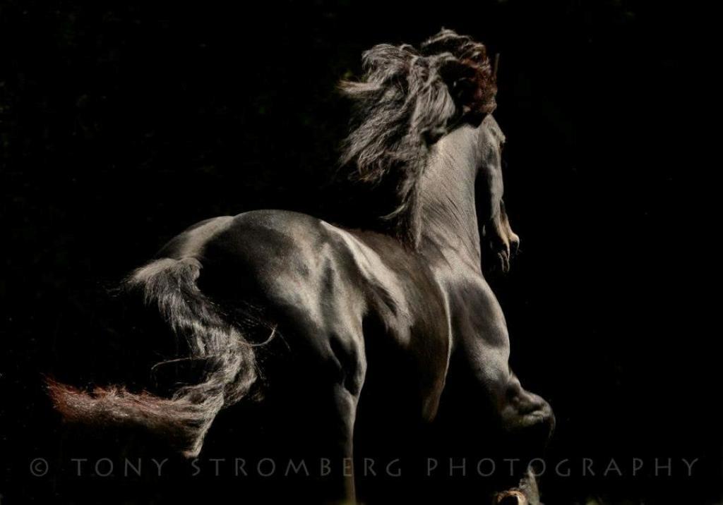 Tony Stromberg (3)