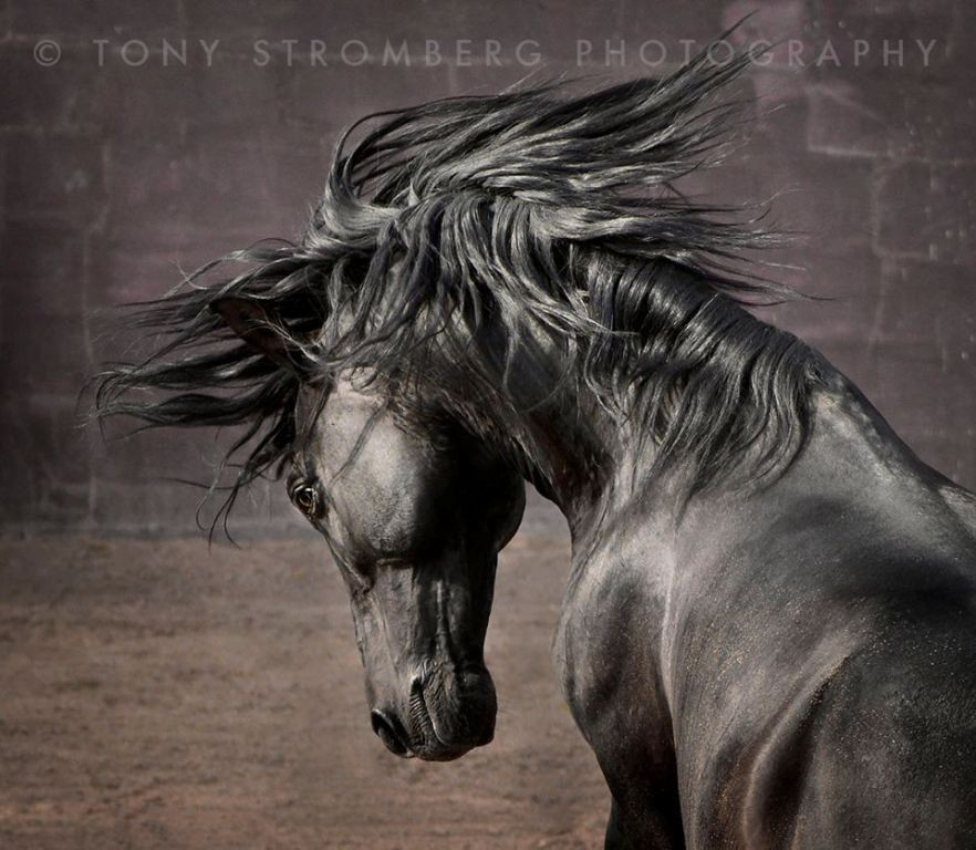 Tony Stromberg (6)