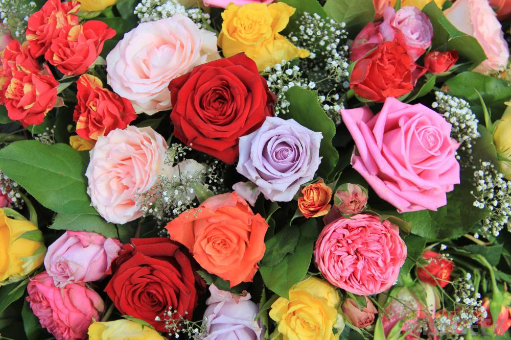 rose-bouquet-different-colors