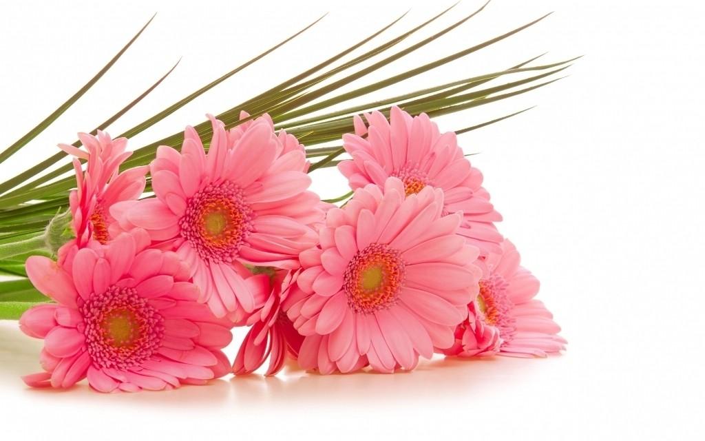 stunning flowers (1)