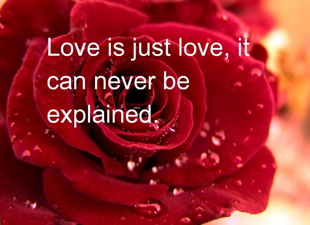 valentines day quotes (7)