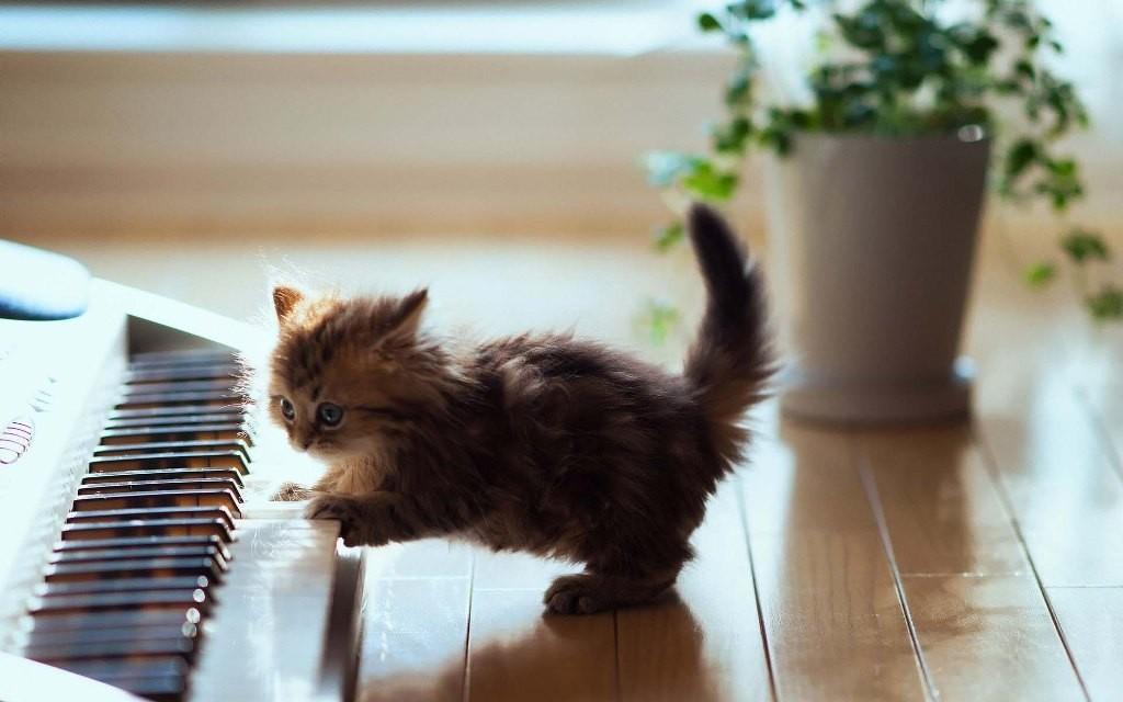 play piano (1)