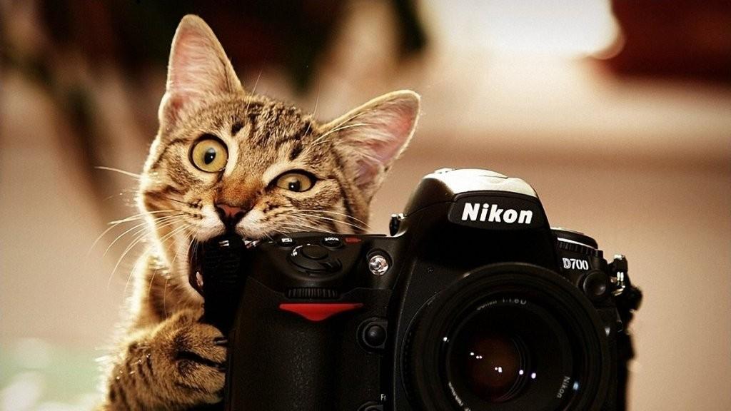 photography (4)