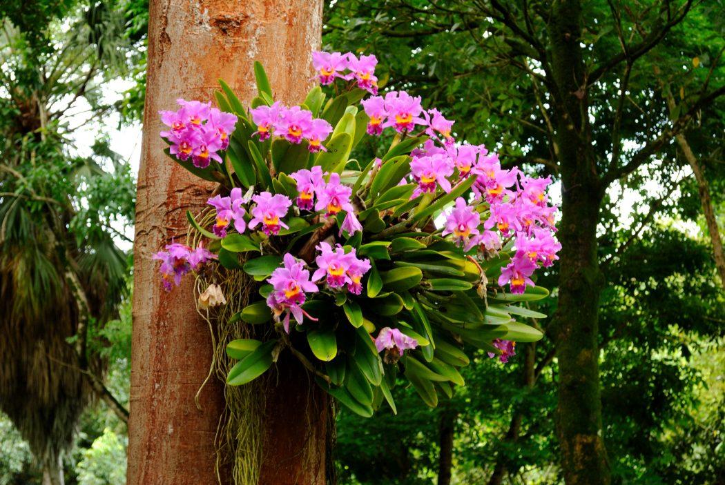 Orchids 4