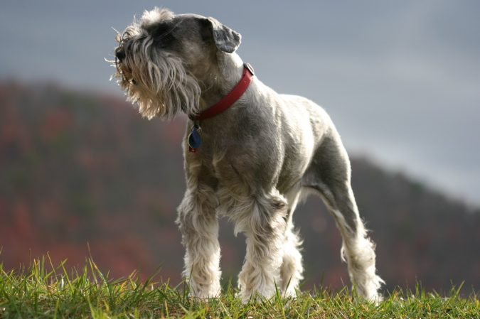 Top 10 Unusual Dog Breeds That Don T Shed