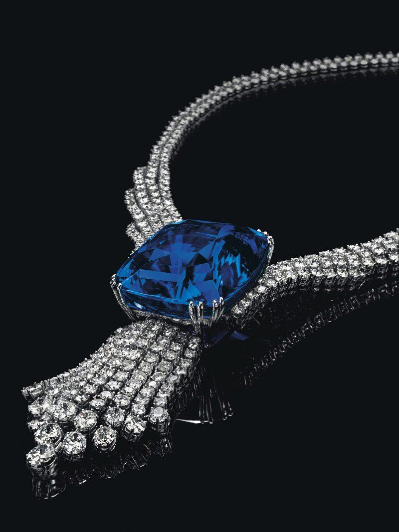 blue-belle-of-asia-1