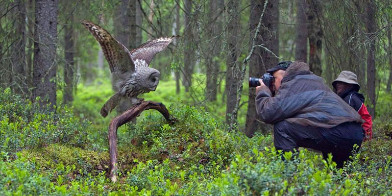 Photo of Top 10 Best Photographers of Wild & Human World