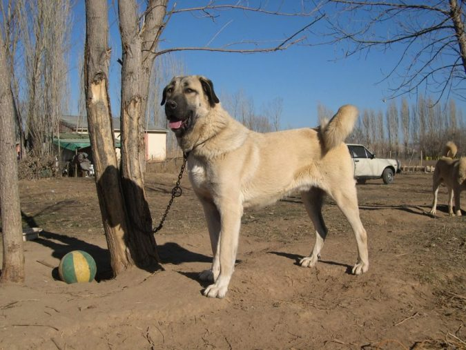 Good Tempered Family Dog Breeds