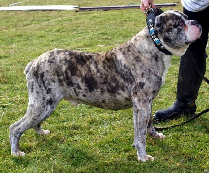 Top 10 Dogs With The Most Unusual Coats Ever