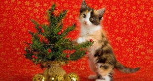 Top 10 Smartest Ways to Protect Christmas Trees from Pets