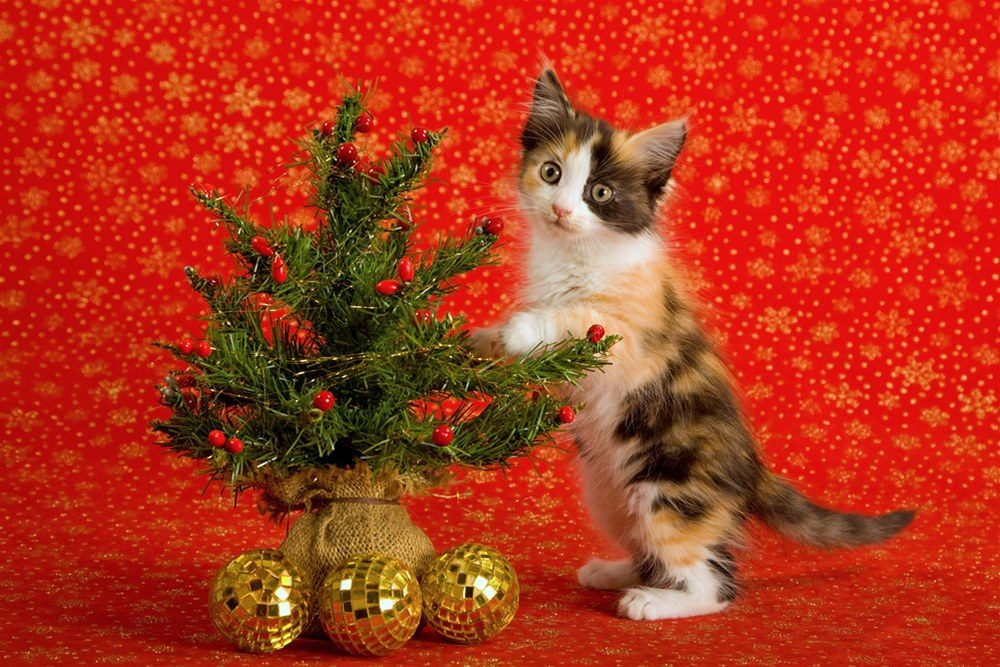 Photo of Top 10 Smartest Ways to Protect Christmas Trees from Pets