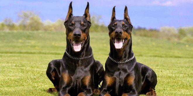 Top Ten Dog Breeds That Bite