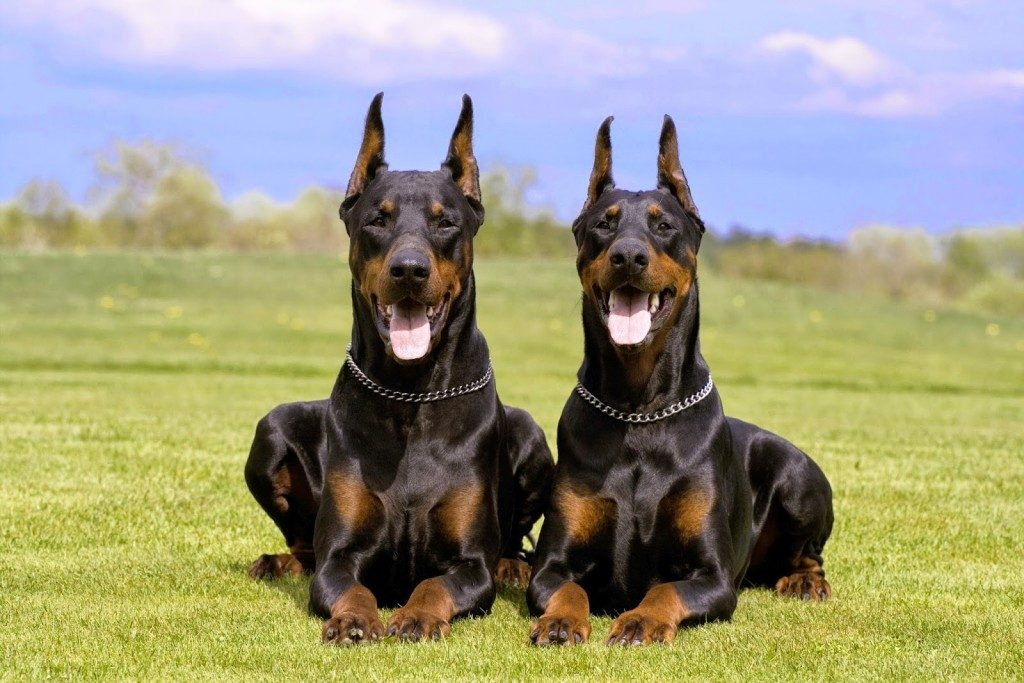 Photo of Top 10 Dog Breeds with Strongest Bites