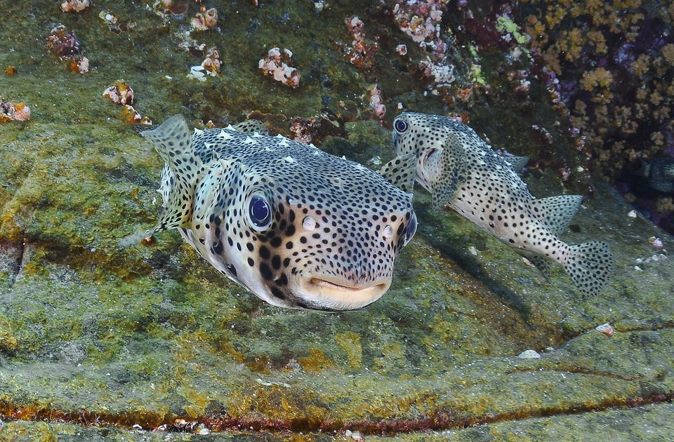 Photo of Top 10 Most Poisonous & Dangerous Fishes in The World