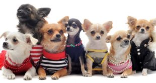 Top 10 Cutest Dogs Clothing Styles That Will Stay Forever
