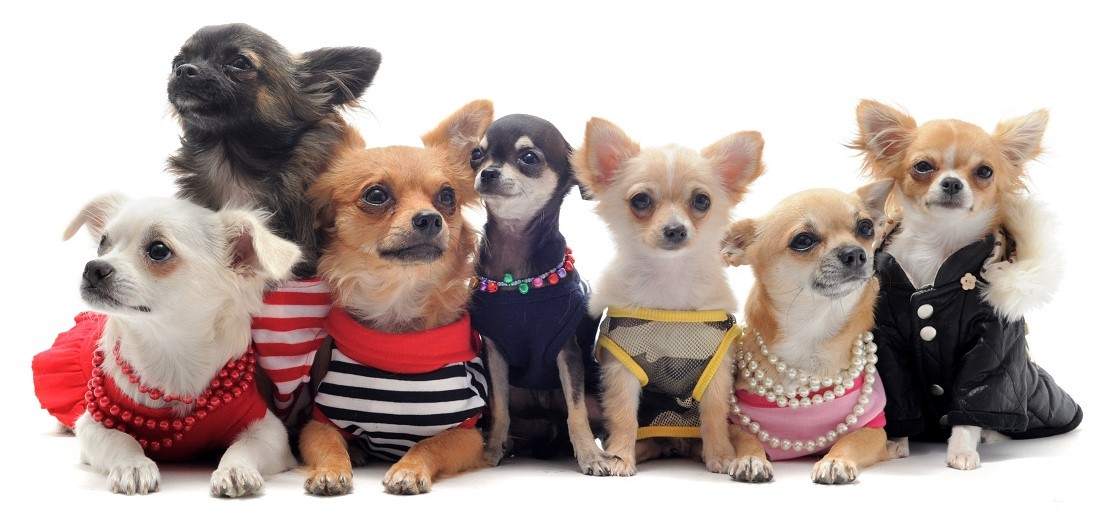 Photo of Top 10 Cutest Dogs Clothing Styles That Will Stay Forever