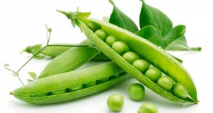 Top 10 Green Peas – Health in a shell!